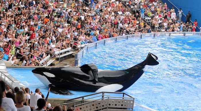 Sea World Orlando Top Toddler Attraction