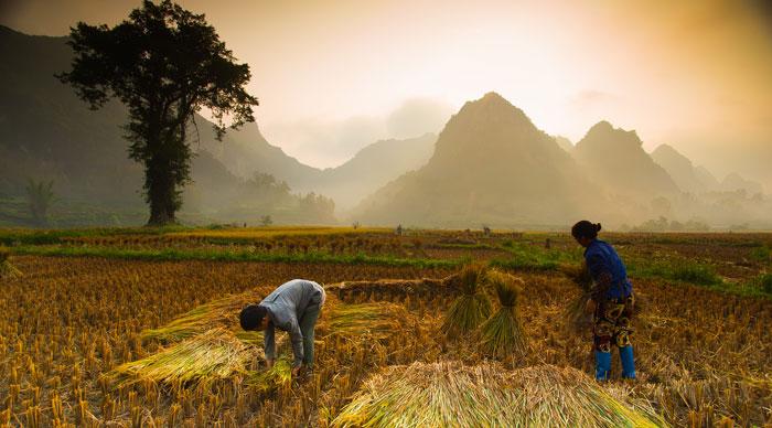 Farmers at field in Vietnam