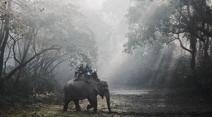 Chitwan national Jungle