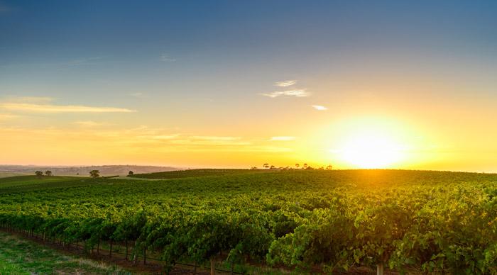 Wine valley Barossa