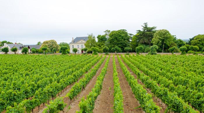 Loire Valley Wine Region