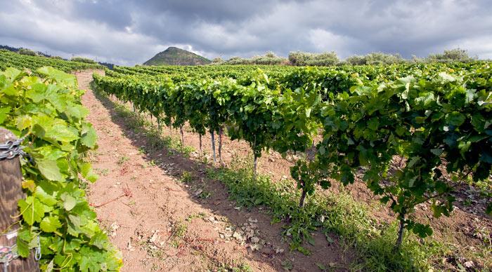 Sicily Wine Region
