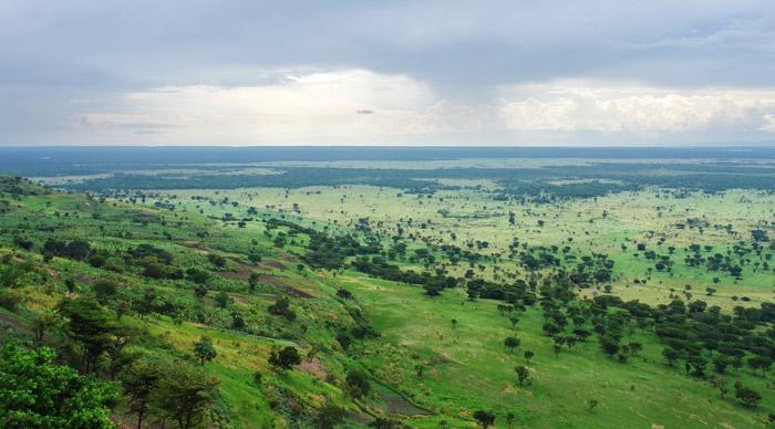 Bwindi Forest Safari