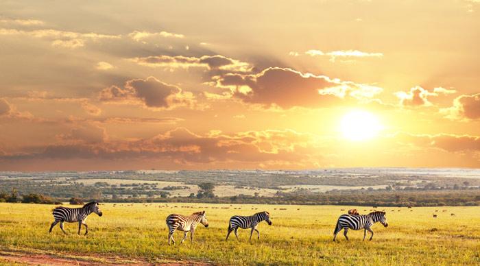 A herd of Zebra at Serengeti National Park