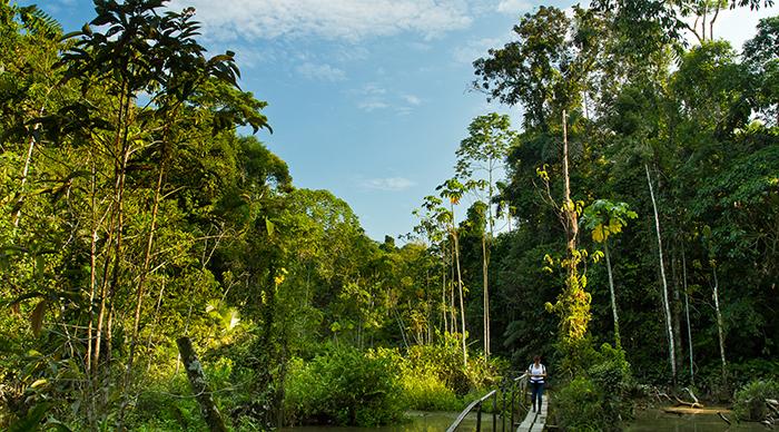Women walking in the Amazon rainforest