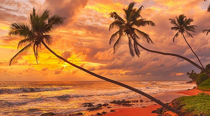Sunset over the beach in Sri Lanka