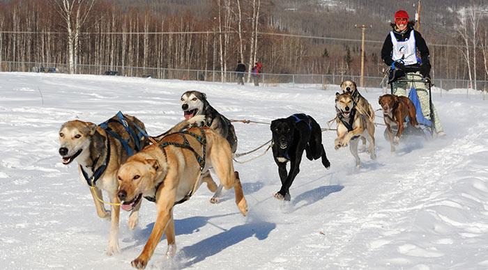 Sled dog race in Alaska