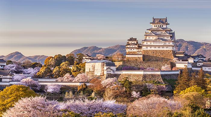 Japan Himeji castle White Heron Castle in beautiful sakura cherry blossom season